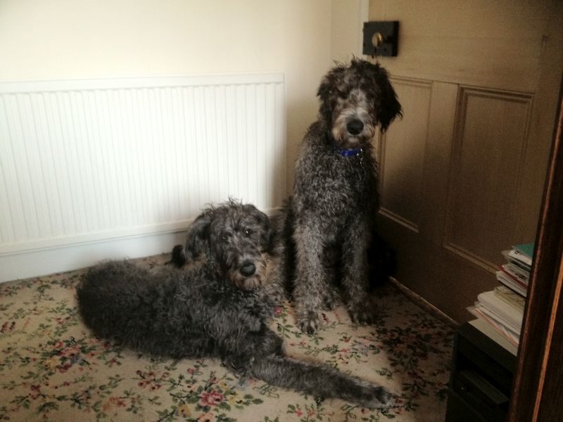 Alfie and Pebbles with long hair